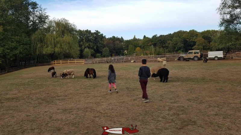 The juniors of the Torpille team walk around the enclosure of the Gavotte's farm where children can pet sheep, ponies, alpacas, donkeys and goats.