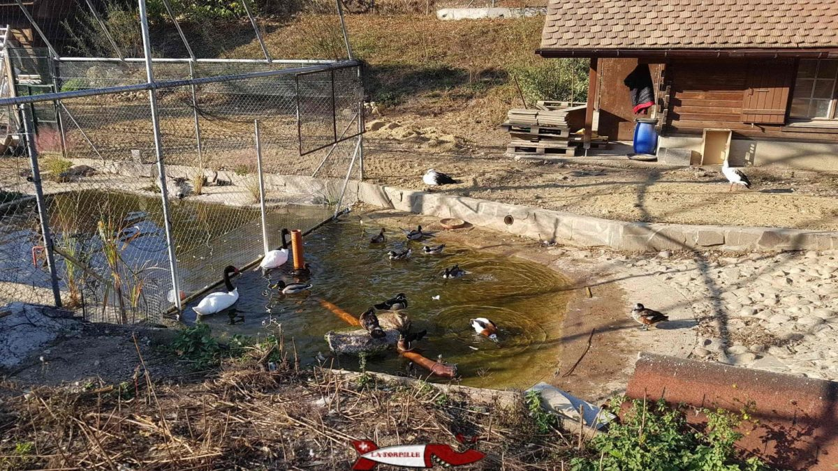 L'espace des canards à la ferme de la Fondation CSC.