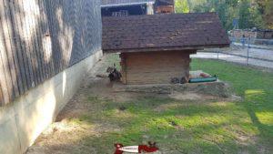 Lapins à la ferme de la fondation CSC à Saint-Barthélémy