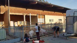 La ferme abritant les vaches à la ferme de la fondation CSC