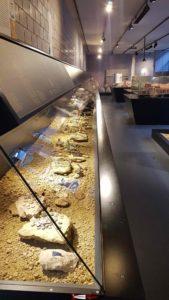 Une longue vitrine sur les objets de la vie courante au musée romain de Lausanne-Vidy