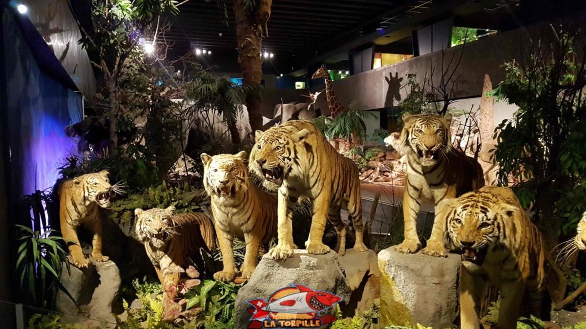 Un des plus beaux musée de Suisse, gratuit de surcroit, le musée d'histoire naturelle de Genève.