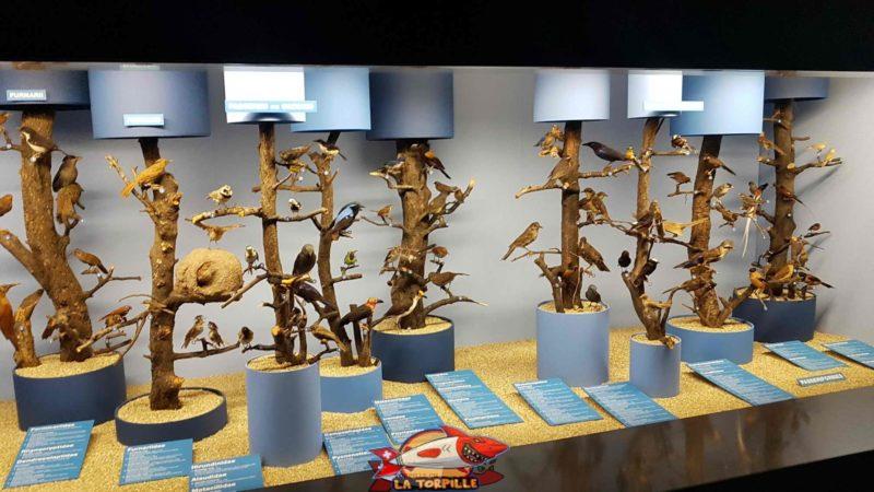 Des oiseaux exotiques présentés au musée d'histoire naturelle de Genève