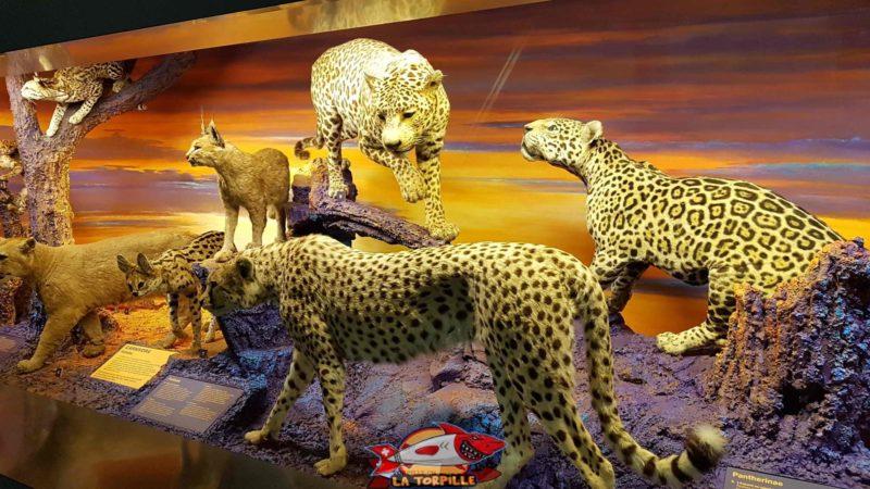 Des mammifères exotiques au deuxième étage du musée d'histoire naturelle de Genève