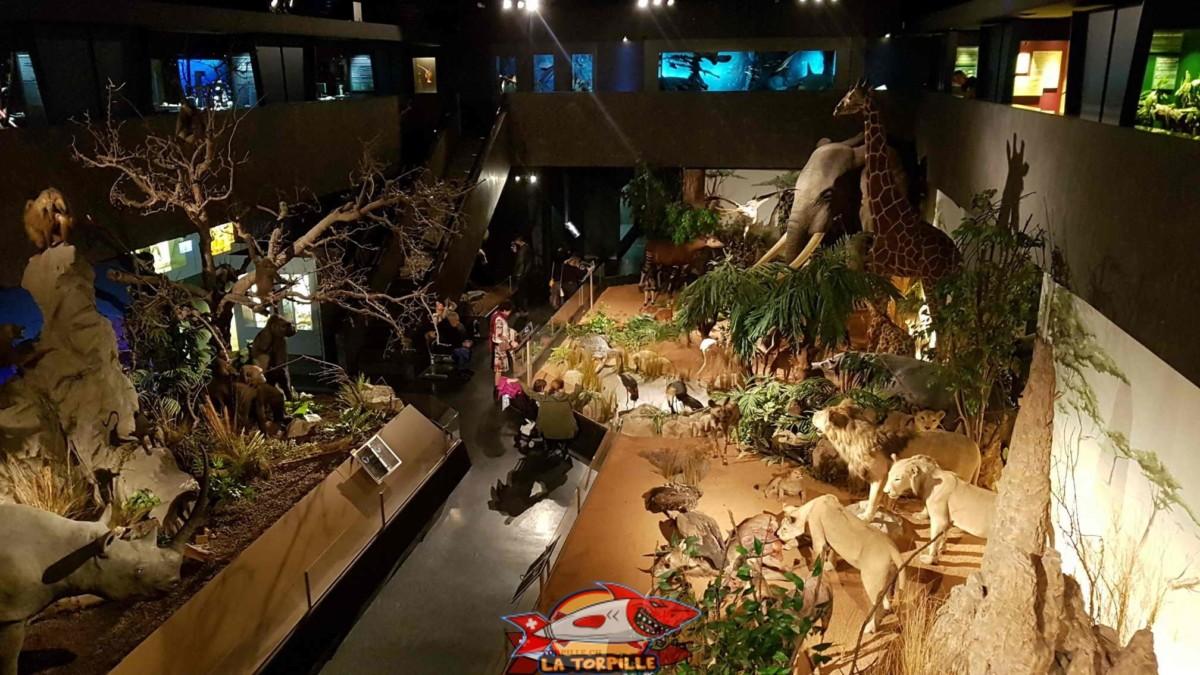 Le museum d'histoire naturelle de Genève est le plus beau musée de Suisse Romande