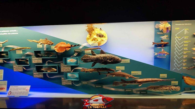 poissons présentés au deuxième étage du muséum d'histoire naturelle de Genève