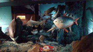 poissons et mammifères marins présentés au deuxième étage du muséum d'histoire naturelle de Genève
