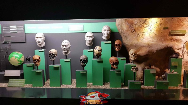the history of man at the Geneva Museum of Natural History