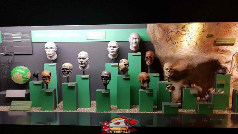 l'histoire de l'homme au muséum d'histoire naturelle de Geneve