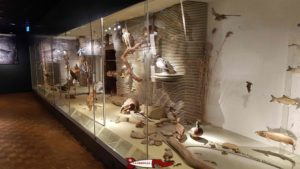 showcases on regional fauna at the Natural History Museum of Fribourg