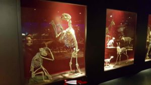 skeletons at the Natural History Museum in Fribourg