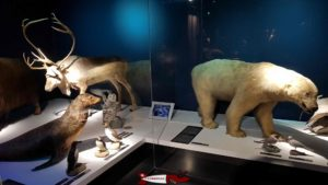 Arctic animals at the Natural History Museum of Fribourg