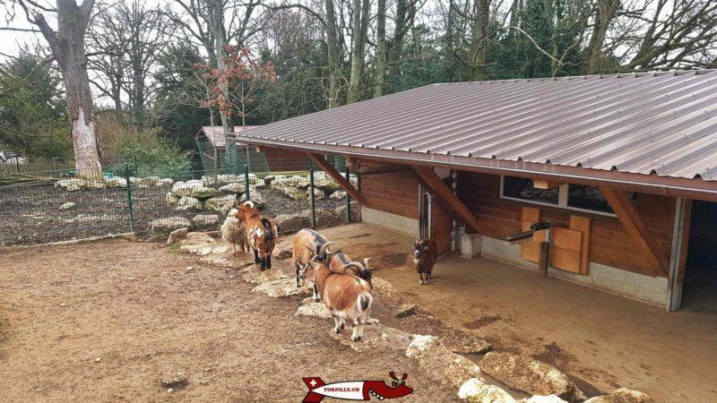 la chèvres au parc challandes