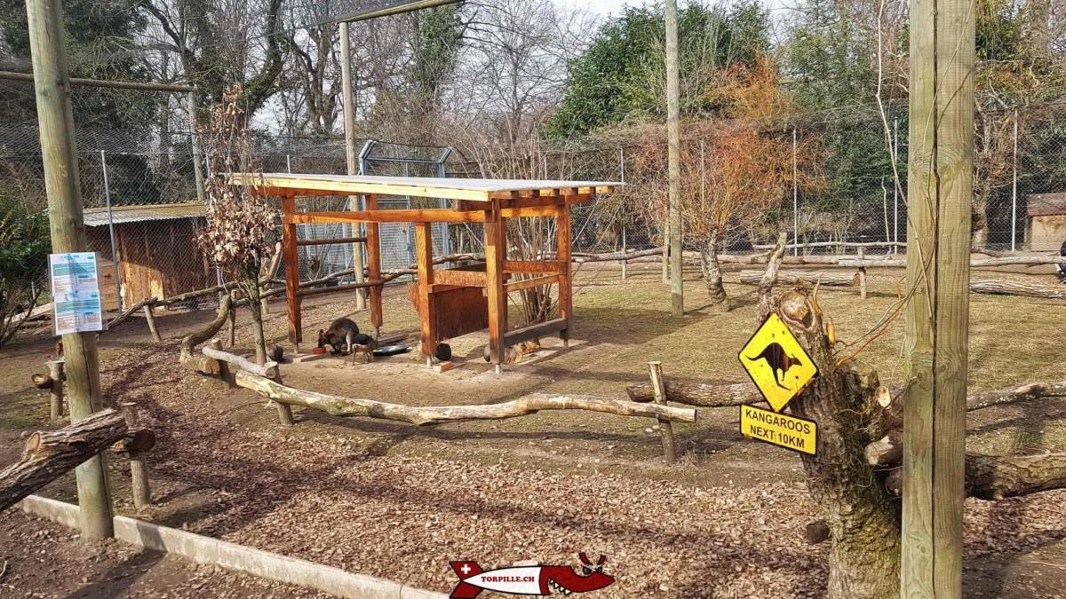 le chemin à côté des wallabys au parc challandes de bellevue