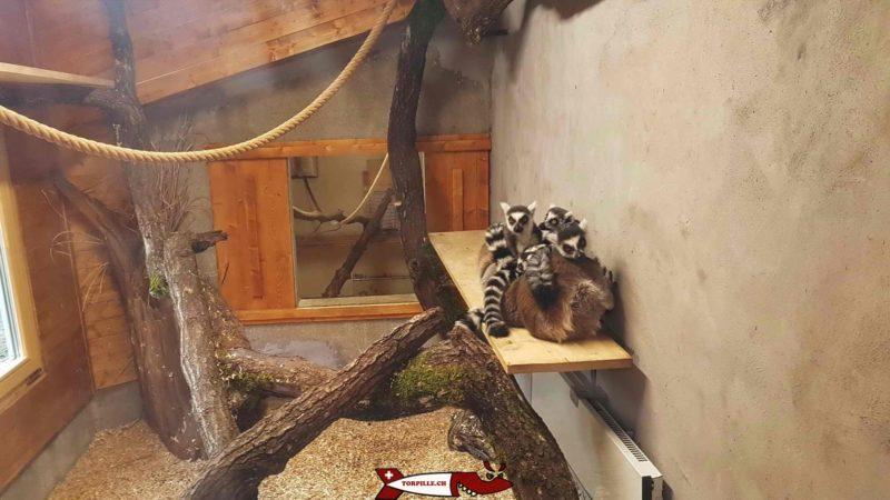lémuriens au parc challandes