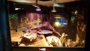 Les serpents au vivarium de meyrin
