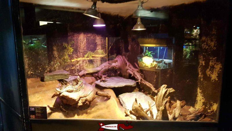 Snakes at the meyrin vivarium