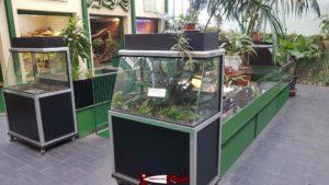 Les terrariums du rez au vivarium de meyrin