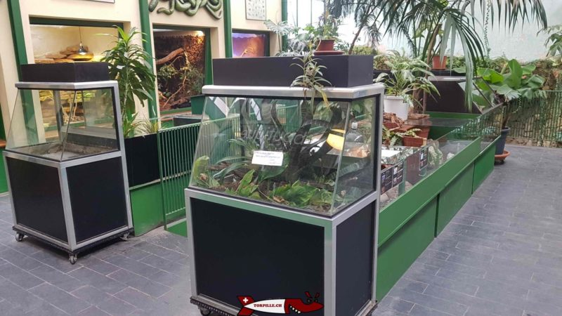The terrariums on the ground floor.