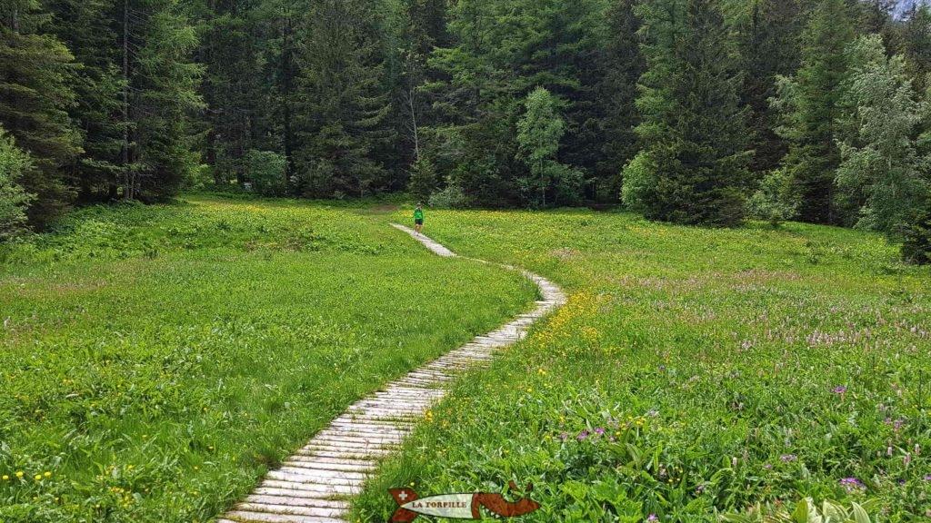 Le début sur des planches en bois dans la zone humide.