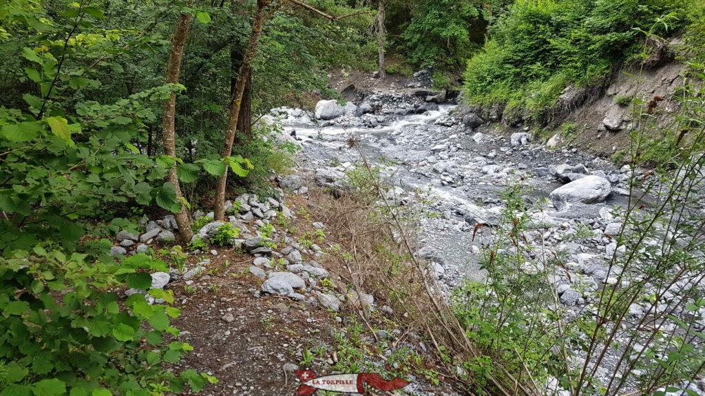 Le chemin dans la forêt le long de la rivière.