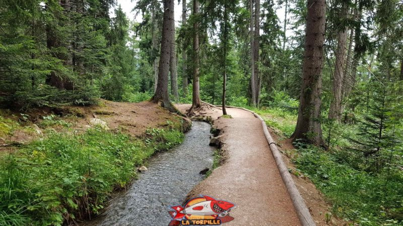 The bisse des Miriouges, a nice walk in the forest, in the middle of the chalets and around the pond of the Miriouges.
