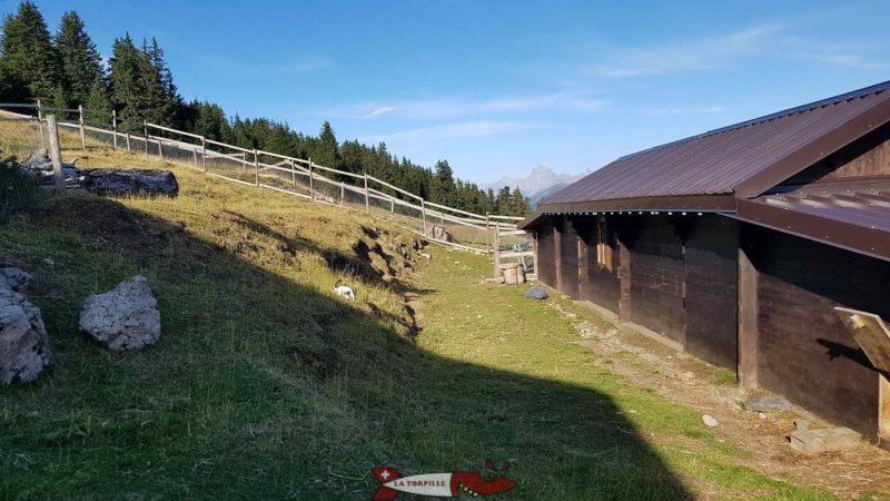 lapins au relais panoramique des Crosets