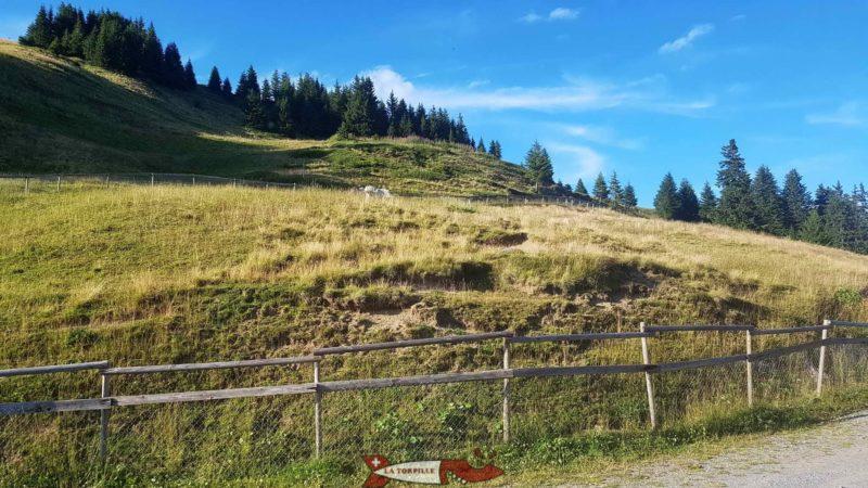poneys au relais panoramique des Crosets