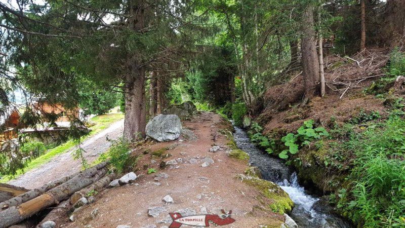 Le sentier le long des bisses se situe majoritairement dans la forêt.