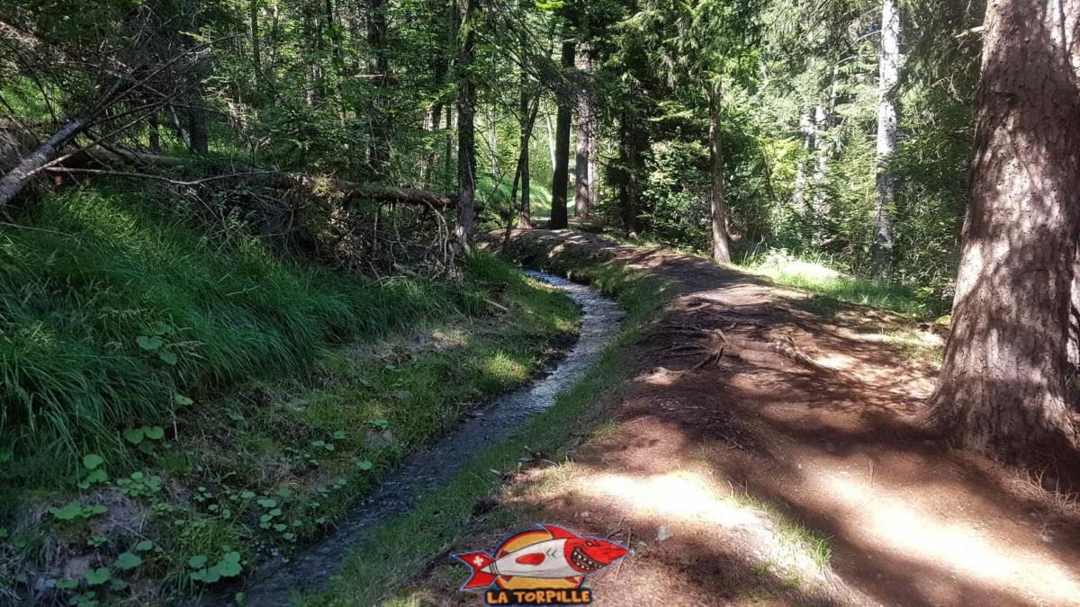 Le bisse du Tsampé dans la forêt.