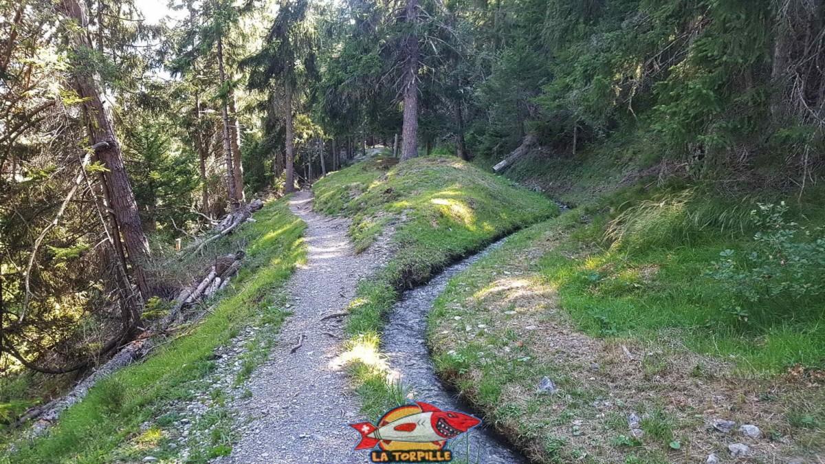 Le bisse du Tsanpé chemine dans la forêt de Savièse.