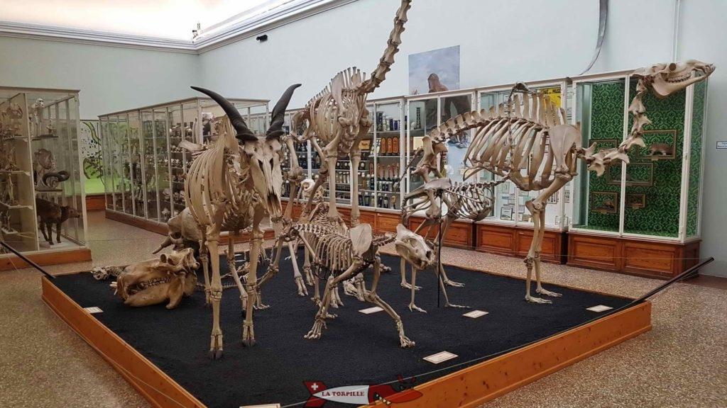 Des squelettes de grands animaux.