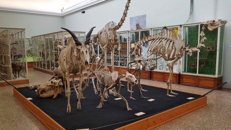 Skeletons of large animals.