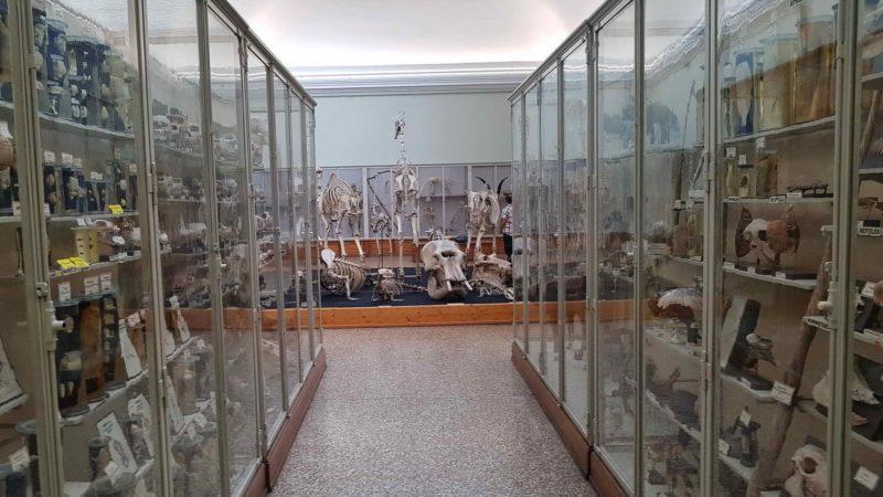 Animal skulls.