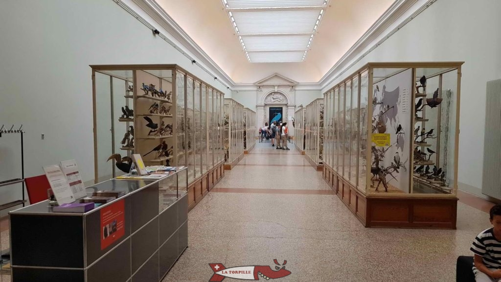 Une aile du musée de zoologie avec des vitrines de chaque côté de l'allée.