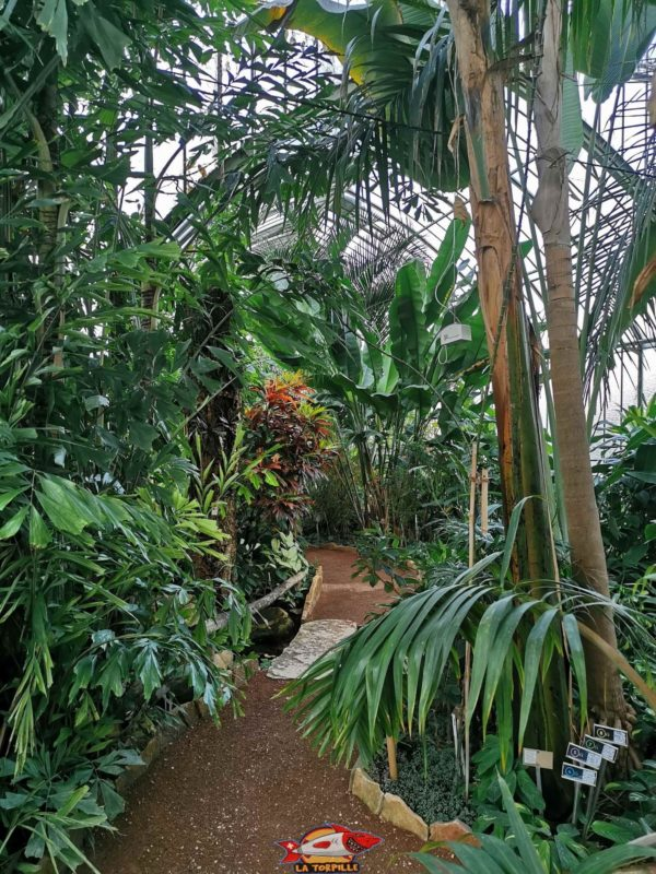 The tropical interior of a greenhouse. Conservatory and Botanical Garden of the City of Geneva