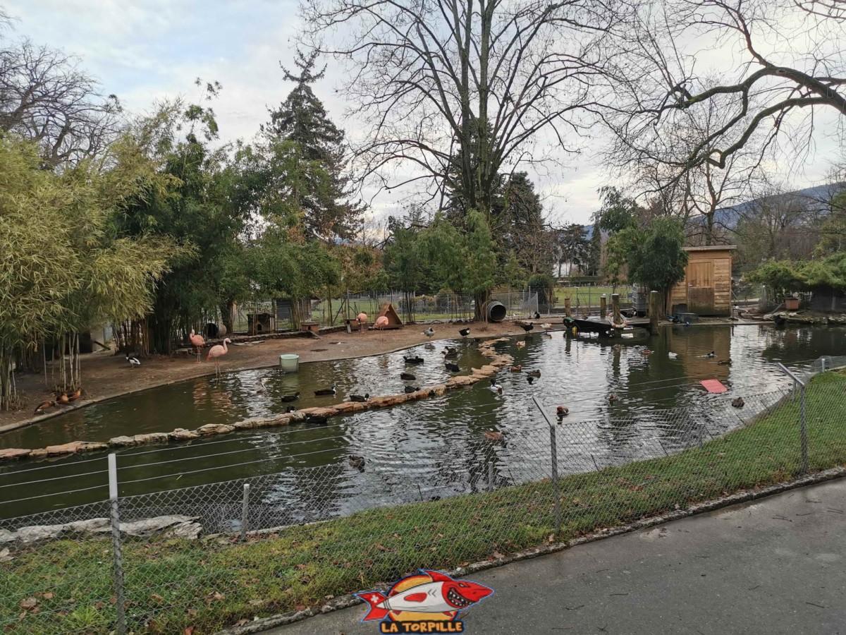 L'espace des canards du mini-zoo du jardin botanique de Genève.