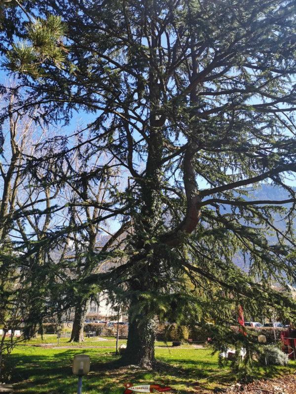 Un très bel arbre au à coté du parcours de minigolf.