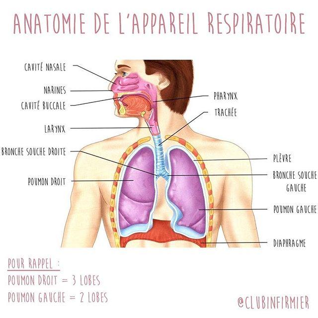 L'anatomie de l'appareil respiratoire.