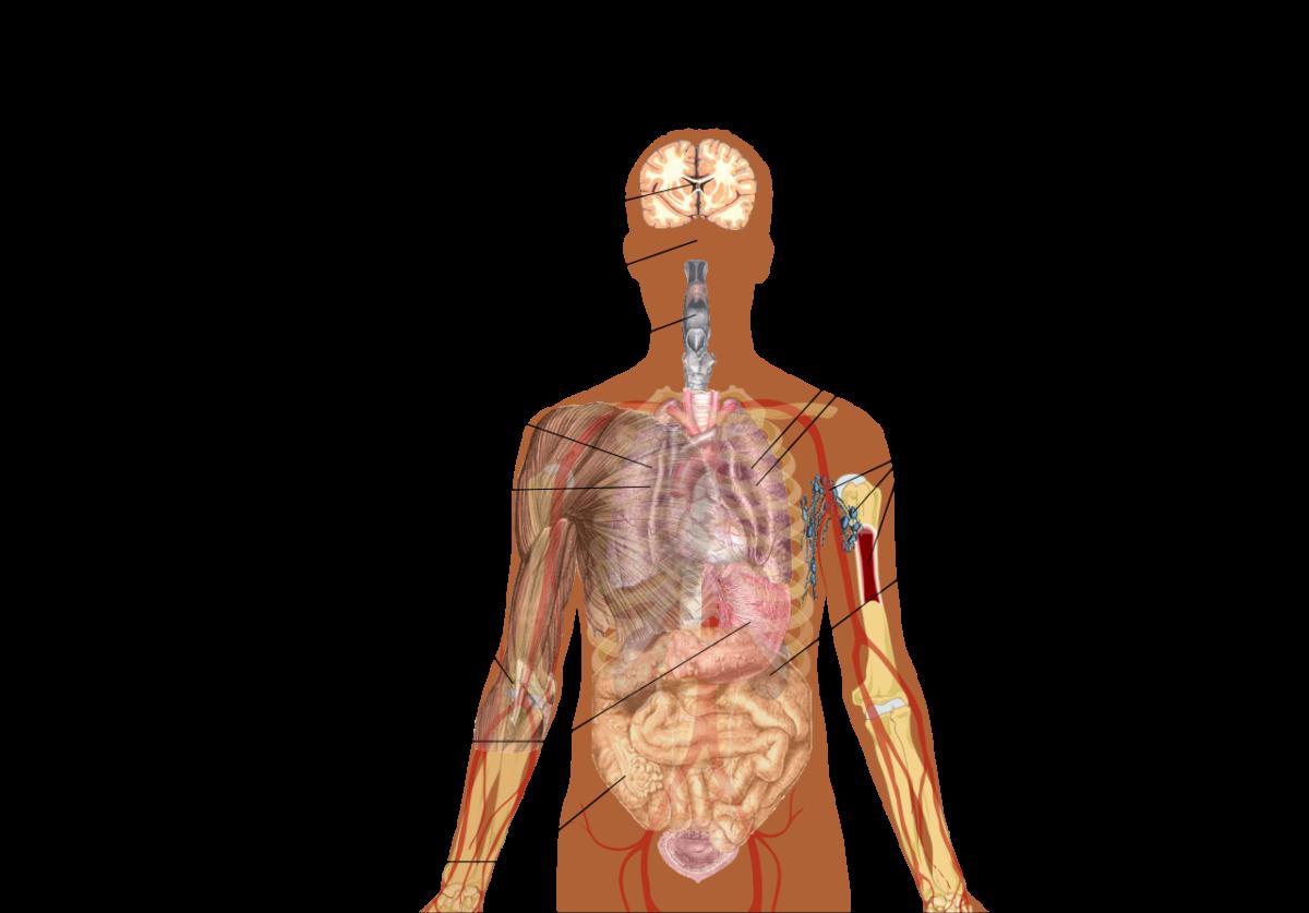 Une carte réumant les symptômes et patologies liées au coronavirus.