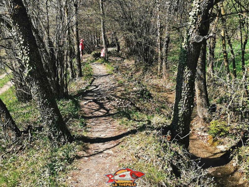 Le chemin le long du bisse dans la forêt.