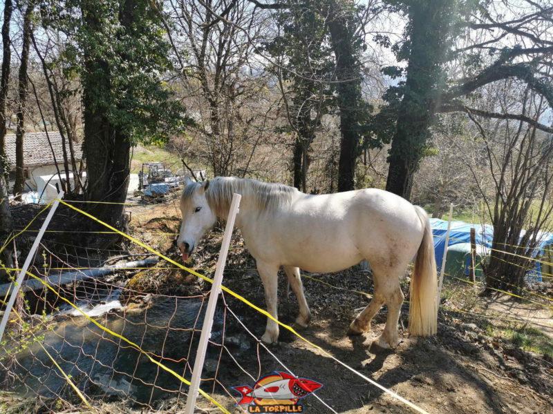 De nombreux animaux sont visibles lors du parcours comme des cochons, vaches, chèvres et chevaux.