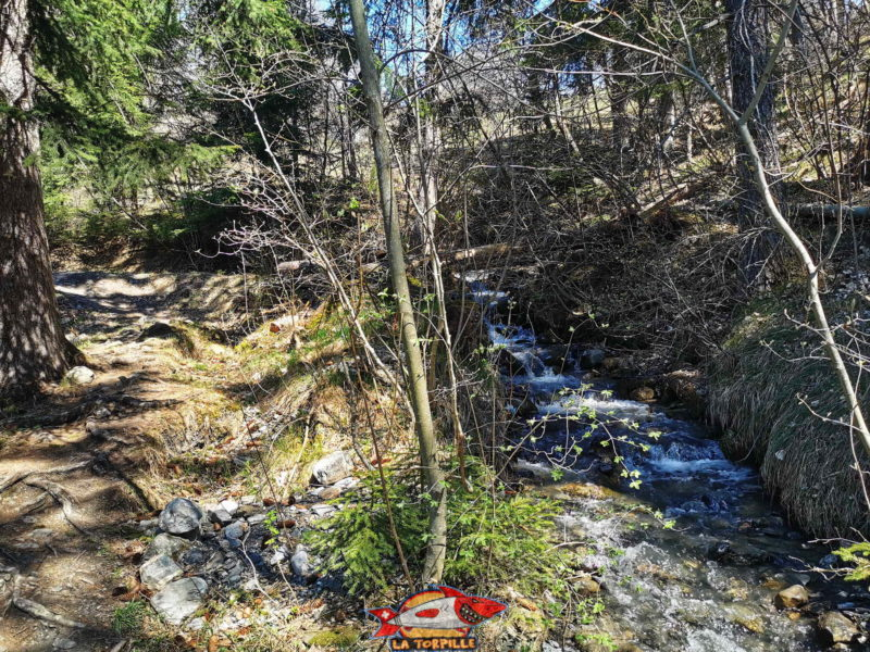 Le bisse de Grimisuat en grande majorité dans la forêt.