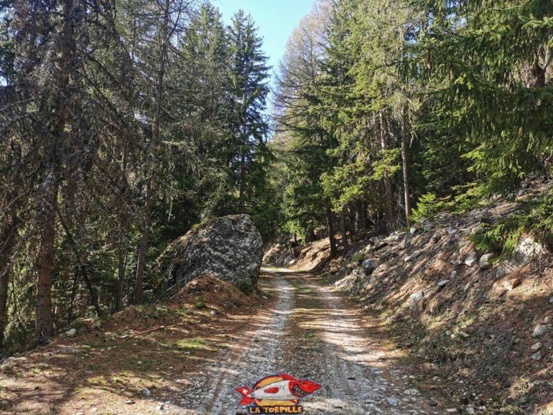Une chemin forestier avec épicéas et mélèzes. bisse de tsa creta