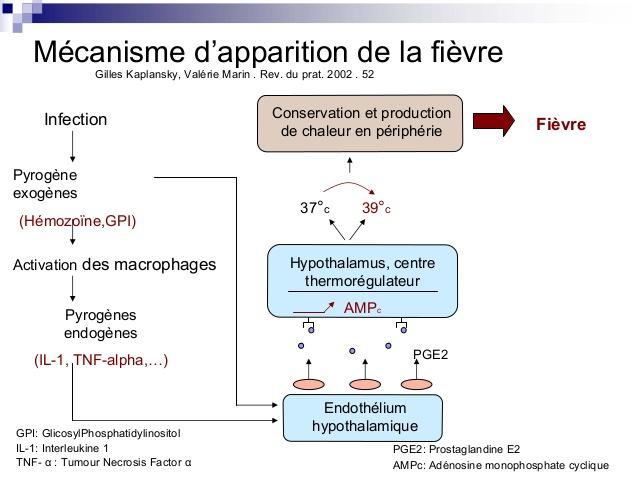 Le mécanisme détaillé de l'apparition de la fièvre