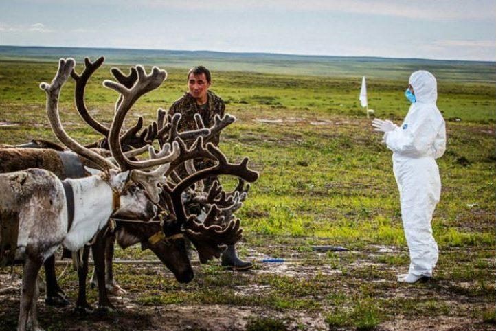 Une étonnante photo où l'on voit un vétérinaire inspecter des rennes dans le Grand Nord russe.