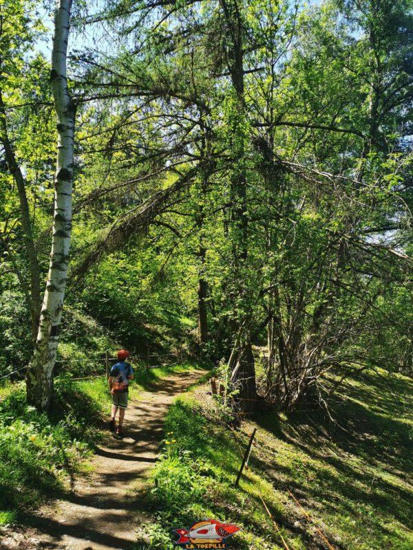 Le parcours le long du bisse de Salins est majoritairement en forêt.
