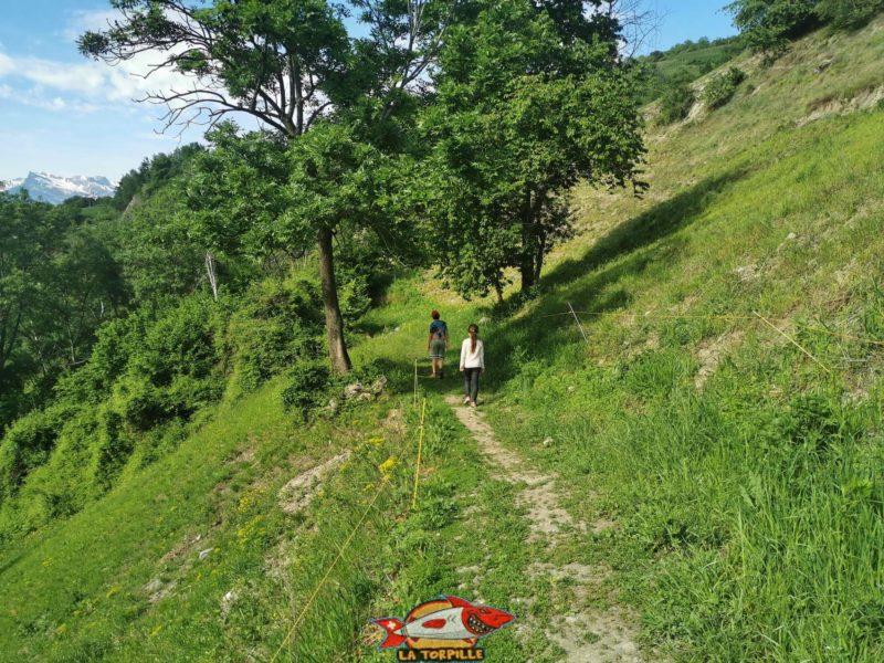 Après le passage par Brignon, le chemin suit des paturages le long du bisse de Baar.