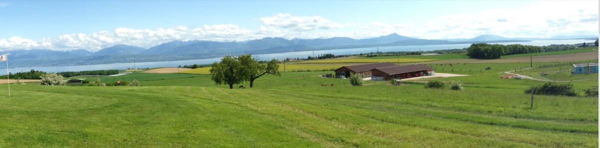 Un parcours du Swin Glof de Lavigny avec la vue sur le lac Léman et les Alpes.