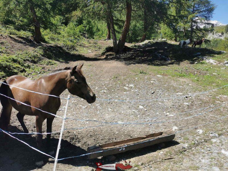 Les chevaux. mini zoo d'Ovronnaz